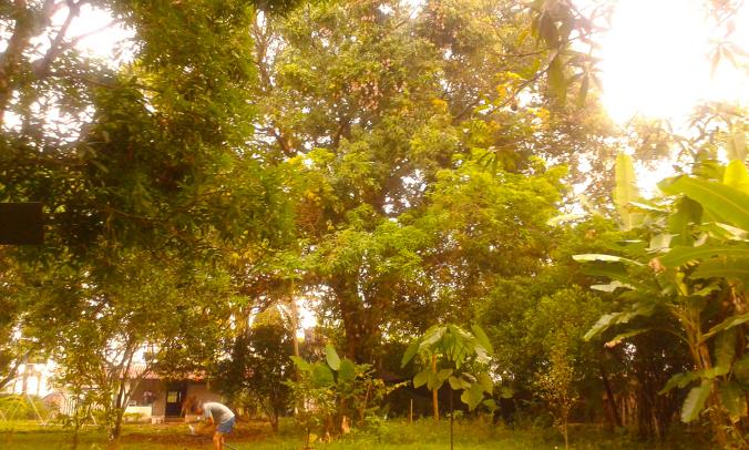 Permacultura, Mango secular