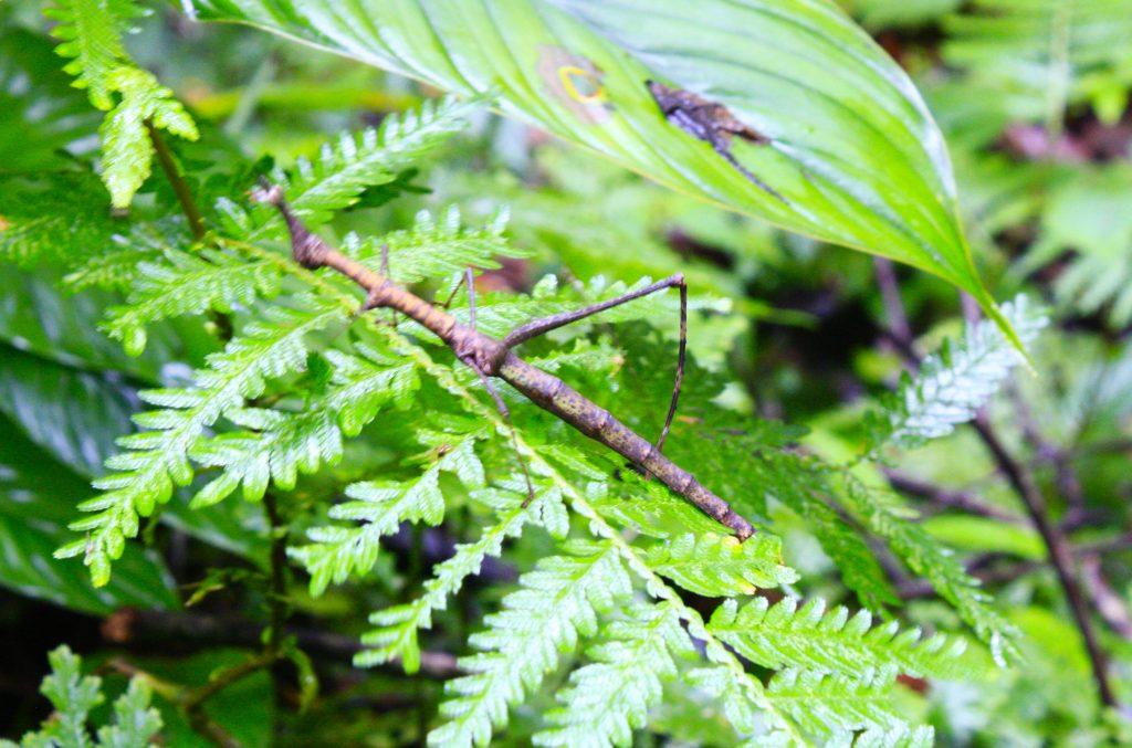 caminata en la selva amacayacu colombia