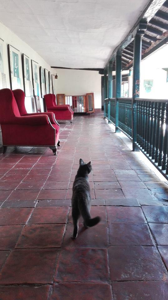 amar-a-los-animales-amo-los-gatos-hotel-guaduas-Colombia